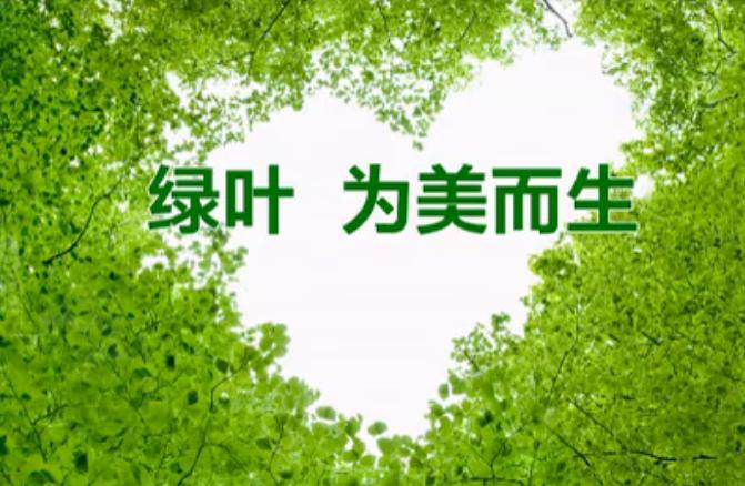 苏州绿叶美丽事业